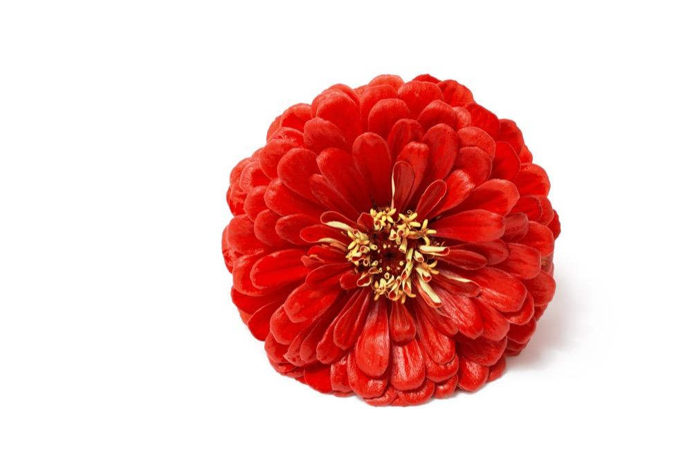 Comment effectuer une photo macro de fleur?